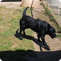 Adopt A Pet :: LARRY - Duncan, OK