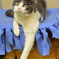 Adopt A Pet :: Puerto Rico170562 - Atlanta, GA
