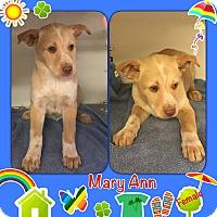 Adopt A Pet :: MaryAnn pending adoption - Manchester, CT