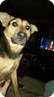 German Shepherd Dog Mix Dog for adoption in Wyoming, Michigan - Tessy