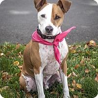Adopt A Pet :: Harley - St Helena, CA