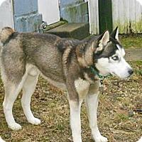Adopt A Pet :: Sitka - Horsham, PA