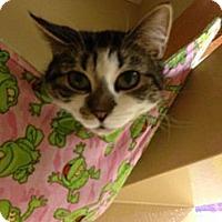Adopt A Pet :: Sora - Monroe, GA