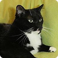 Adopt A Pet :: Rosalinda - Richland, MI