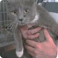 Adopt A Pet :: Berri - McDonough, GA