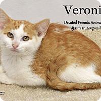Adopt A Pet :: Vinnie - Ortonville, MI