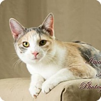 Domestic Shorthair Cat for adoption in Crescent, Oklahoma - Marie