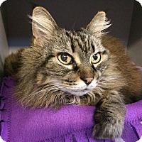 Adopt A Pet :: Delilah - Sarasota, FL