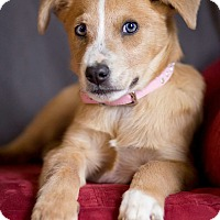Adopt A Pet :: Anna 💜 ADOPTED! - Allentown, PA