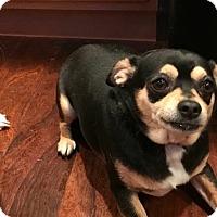 Adopt A Pet :: Lena - Breinigsville, PA