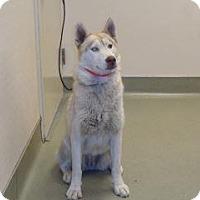 Adopt A Pet :: Honeie - Wildomar, CA
