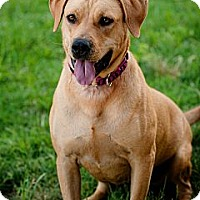 Adopt A Pet :: Lacy - Phoenix, AZ