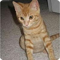 Adopt A Pet :: Fernando - Davis, CA