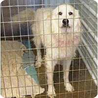 Adopt A Pet :: Alea - Irvington, KY