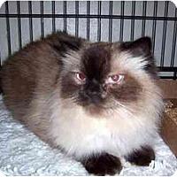 Adopt A Pet :: Malcolm - Alexandria, VA