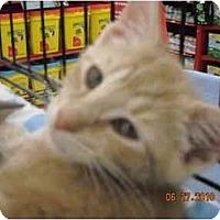 Adopt A Pet :: Isaac - Riverside, RI