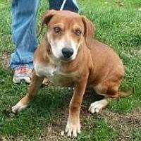 Adopt A Pet :: lenny - Prestonsburg, KY