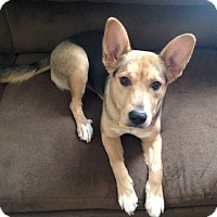Adopt A Pet :: Zoey - Morgantown, WV