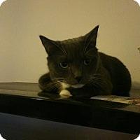 Adopt A Pet :: Dynomite - london, ON