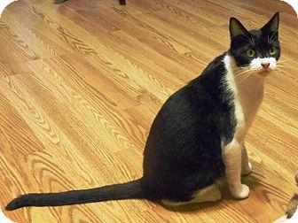 Domestic Shorthair Cat for adoption in Parkton, North Carolina - Ranger