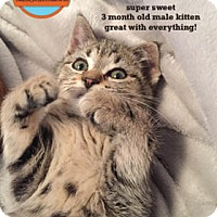 Adopt A Pet :: Thisbe - South Bend, IN