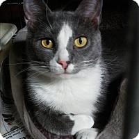Adopt A Pet :: Eeyore - Richboro, PA