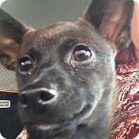 Adopt A Pet :: Jack - Johnson City, TN