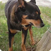 Adopt A Pet :: George - Anderson, IN