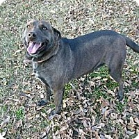Adopt A Pet :: Brownie - Rayville, LA