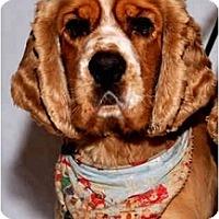 Adopt A Pet :: Duncan - Tacoma, WA