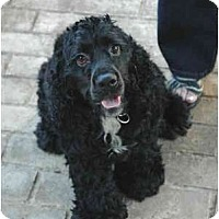Adopt A Pet :: Tubbs - Portland, OR