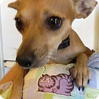 Adopt A Pet :: Joss - Phoenix, AZ