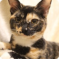 Adopt A Pet :: Tecate - Foothill Ranch, CA