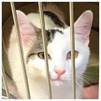 Adopt A Pet :: Dumpling - Chicago, IL
