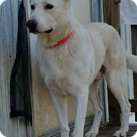 Adopt A Pet :: Saint - Buchanan Dam, TX