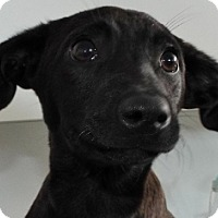 Adopt A Pet :: Elroy - Grants Pass, OR
