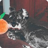 Adopt A Pet :: Leo~~ADOPTION PENDING - Sharonville, OH