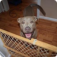 Adopt A Pet :: Bravo - Kennesaw, GA