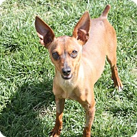 Adopt A Pet :: Snoopy - Henderson, NV