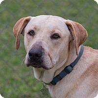 Adopt A Pet :: McCoy (Marley) - Wharton, TX