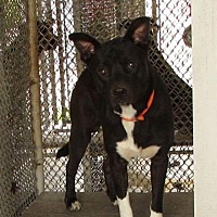 Adopt A Pet :: Martin - Wytheville, VA
