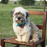 Adopt A Pet :: Drixel - Carrollton, TX