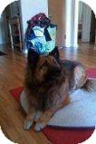 Chow Chow/German Shepherd Dog Mix Dog for adoption in Alliance, Nebraska - Tazzy