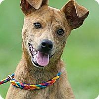 Adopt A Pet :: Willis - Providence, RI