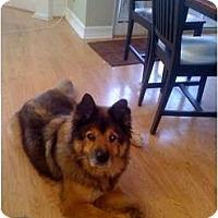 Adopt A Pet :: Thor - Madison, WI
