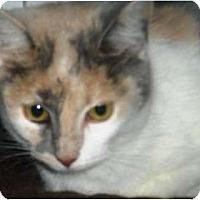 Adopt A Pet :: Juno - Summerville, SC