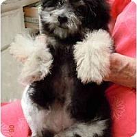 Adopt A Pet :: Annie - ORANGE COUNTY, CA