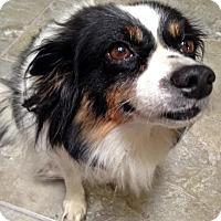 Adopt A Pet :: Lilly - Toronto, ON