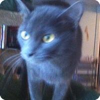 Adopt A Pet :: Genavee - Cocoa, FL