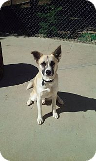 Husky Mix Dog for adoption in North Hollywood, California - Rudy